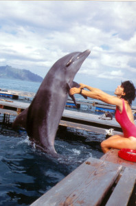 hawaii_dolphin